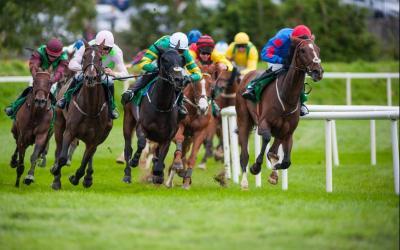 pensions de convalescence pour chevaux de course près de Fréjus