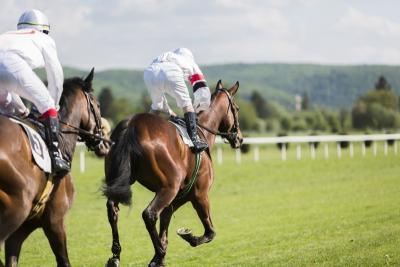pensions de convalescence pour chevaux à  Roquebrune-sur-Argens