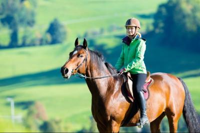 Cours d'équitation au centre équestre Roquebrune-sur-Argens