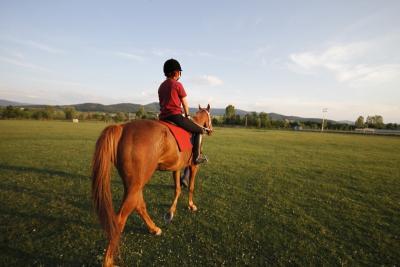Les pensions paddock pour cheval à Roquebrune-sur-Argens