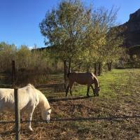 pension pour chevaux de course à Roquebrune-sur-Argens