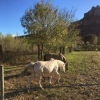 Pension travail chevaux à Roquebrune-sur-Argens