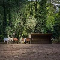 pension box pour chevaux près de Saint-Raphaël