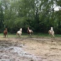 Pension pour chevaux près de Draguignan