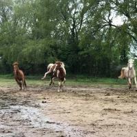 Pension convalescence chevaux près de Fréjus