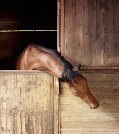 Pensions pour chevaux Roquebrune-sur-Argens