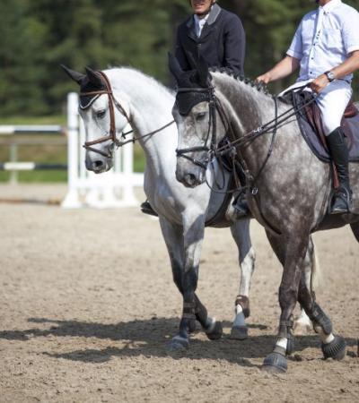 Les pensions retraite pour chevaux à Roquebrune-sur-Argens