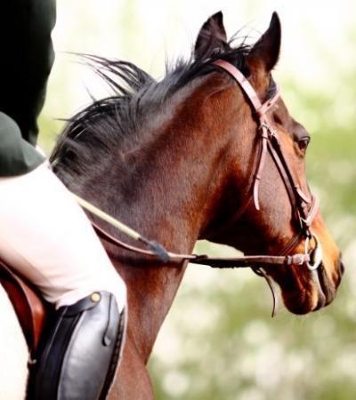 Pensions retraite pour cheval près de Fréjus